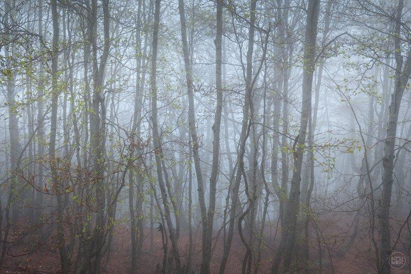 черногория, ловчен, туман, лес Затаивший дыхание лесphoto preview