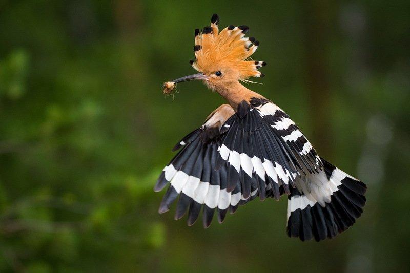 Порхать как бабочка, жалить как пчела.photo preview