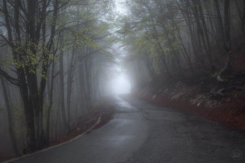 черногория, ловчен, туман, весна Сквозь туманный лесphoto preview