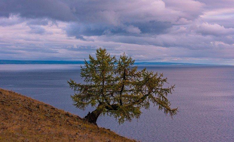 озеро хубсугул монголия вечер закат  осень облака дерево одинокое лиственница Одиночествоphoto preview