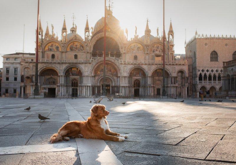 венеция, собака, город  На площади Сан Маркоphoto preview