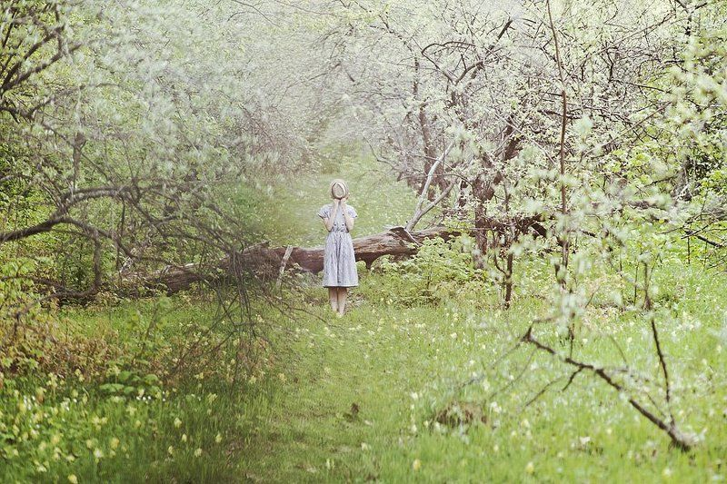 Райские яблочкиphoto preview