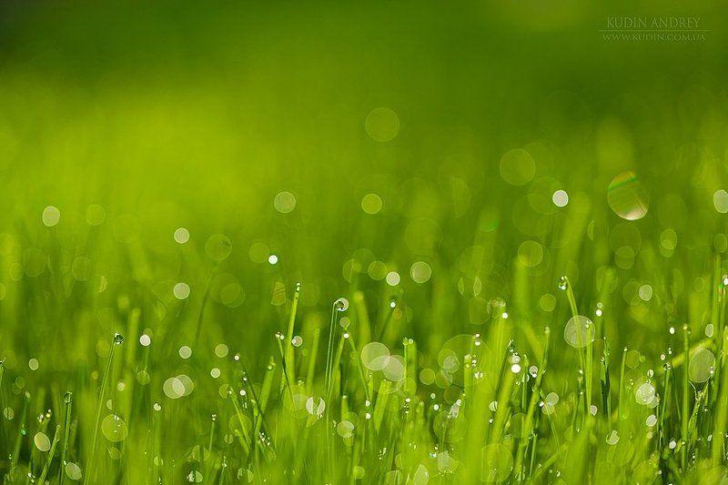 роса, утренняя роса, газон, капли, капли росы, зелёная трава Утренняя....photo preview