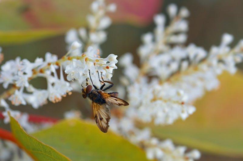 жук,лапы,глаза,свет,блик,солнце,муха,крылья,хвост ***photo preview