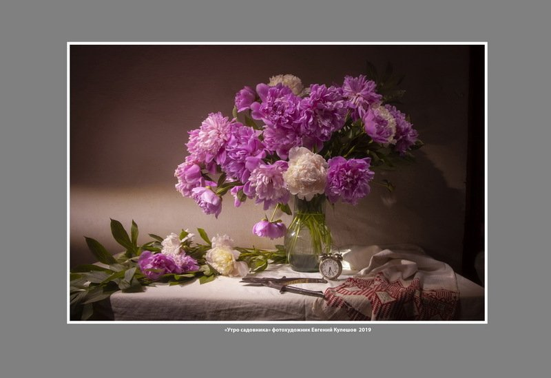 пионы. садовник, цветы, утро, евгений кулешов, фотограф евгений кулешов. натюрморт с цветами Утро садовника. Пионыphoto preview