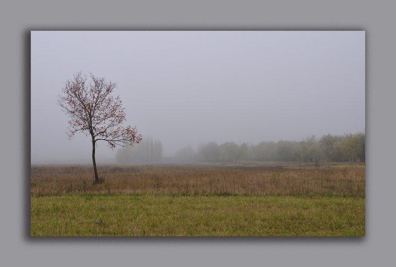 осень, дерево, туман Картина, что писала Осень...photo preview