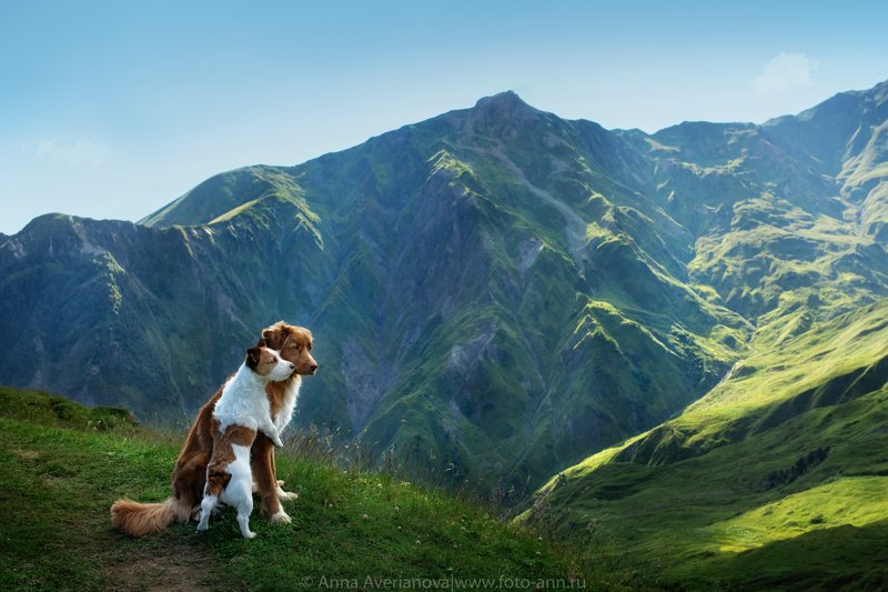 грузия, горы, природа, собаки в горахphoto preview