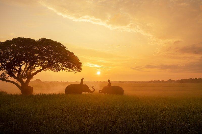 elephant,portrait,animal,Thai,Thailand,sunrise, Morning Talk photo preview