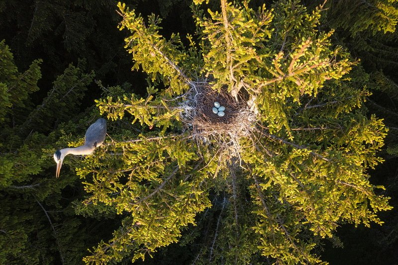 Цапля и гнездоphoto preview