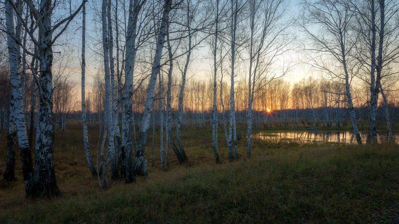 осень сентябрь закат березы ЗАТИХАЕТ ДЕНЬ , ОСЕННИЙ...photo preview