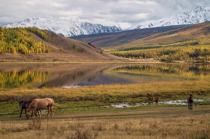 природа  алтай  горы пейзаж путешествие осень тени северо-чуйский хребет отражение озеро лошади У озера...осенним, солнечным денечком.photo preview