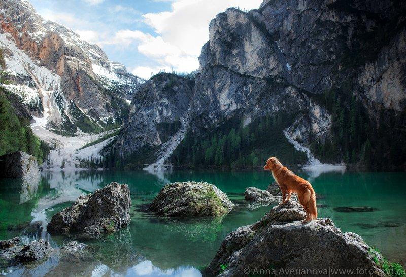озеро, собака, природа, горы lago di Braes photo preview