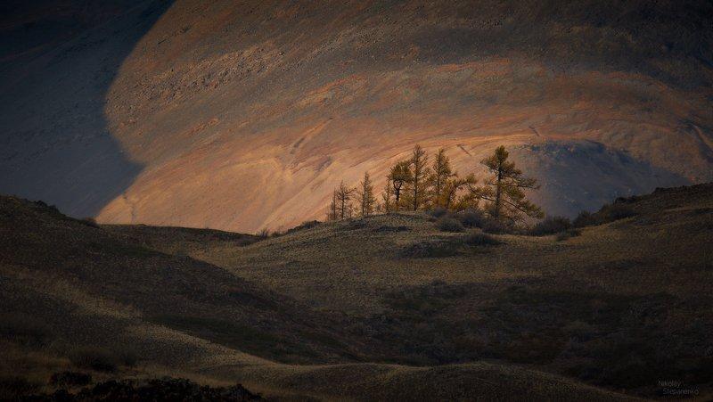 алтай, горы, курай, курайская степь, лиственницы, юпитер Юпитерphoto preview