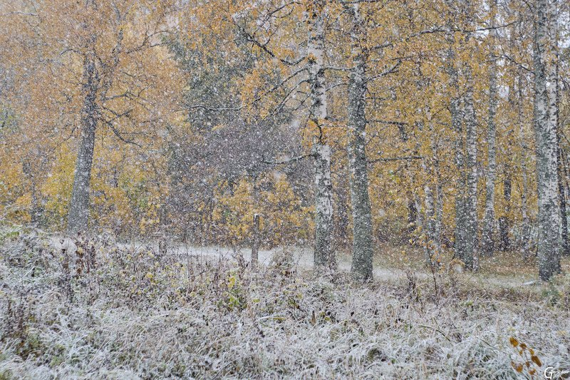 снег,осень,золотая осень,снегопад,подмосковье,пейзаж,природа Первый снегопадphoto preview