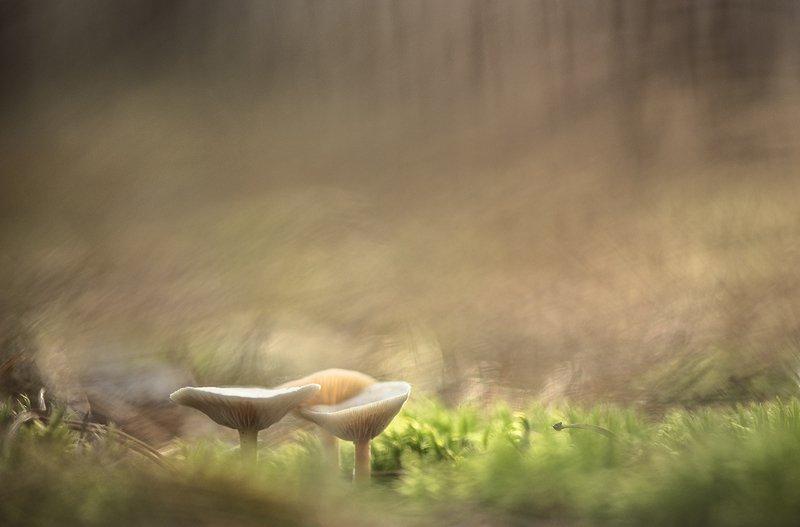 грибы, осень, свет. цвет, макро, поганки, мох, октябрь, воронеж Нежные... поганцы...photo preview