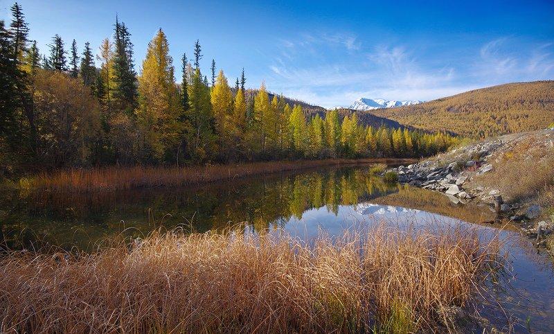алтай, осень, горы, река, чуя, деревья, желтые, палитра Осенние краски Алтаяphoto preview