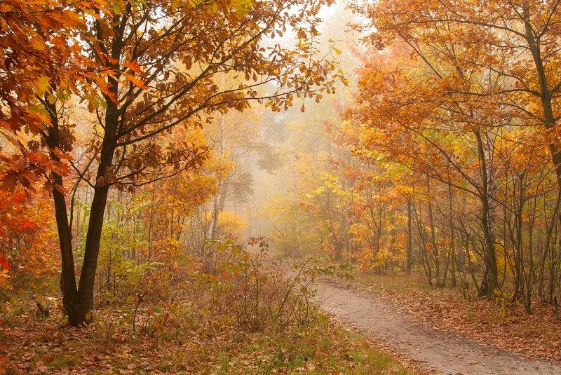 пейзаж, октябрь, туман, осень, красиво, деревья, дорога Дорога в осенюю сказкуphoto preview