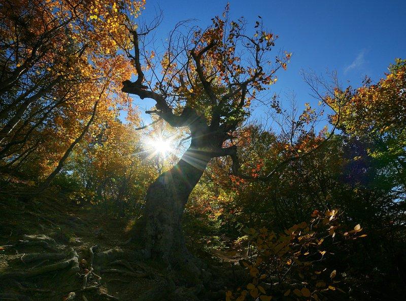 крым, осень, буки, солнце Золотая осень на Демерджиphoto preview