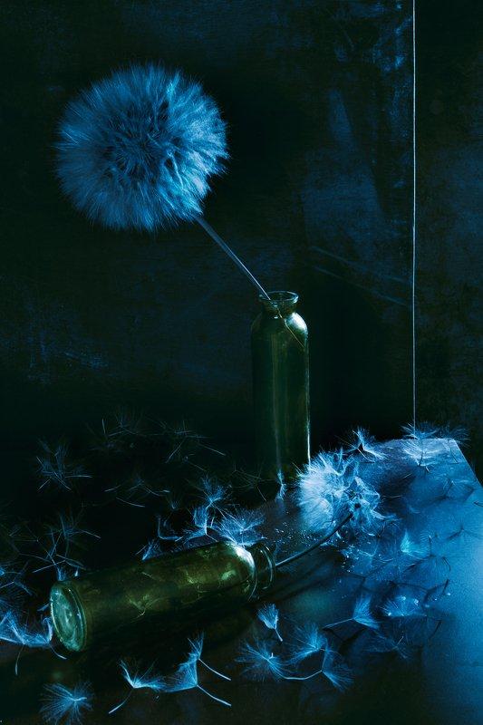одуванчик, ваза, лето, натюрморт, растение Лето в голубых тонахphoto preview