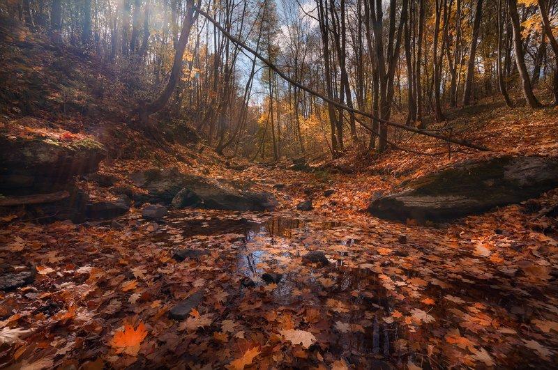 Осенний свет в лесуphoto preview