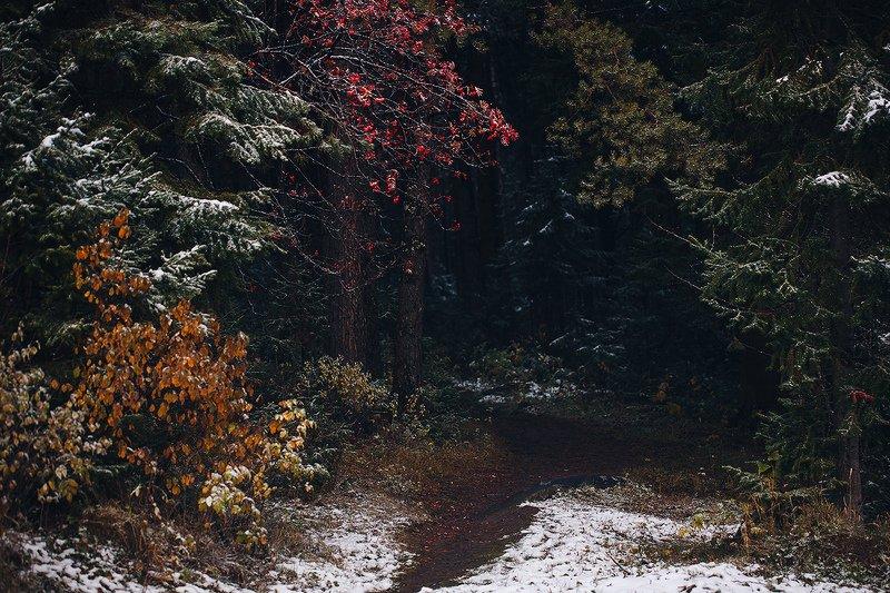 природа, осень, урал, лес, снег На пороге зимыphoto preview