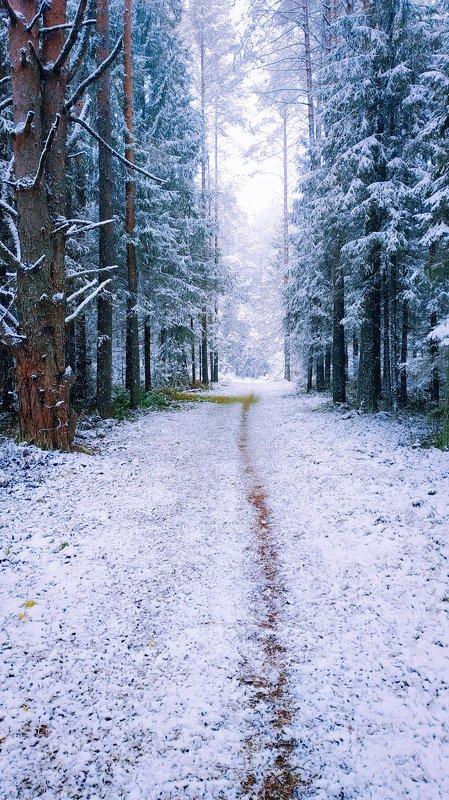 удмуртия,зима, октябрь, пейзаж Зима в октябреphoto preview