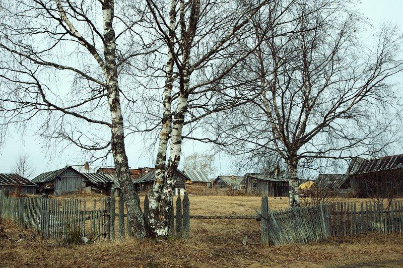 деревня, весна, береза Весна в деревнеphoto preview