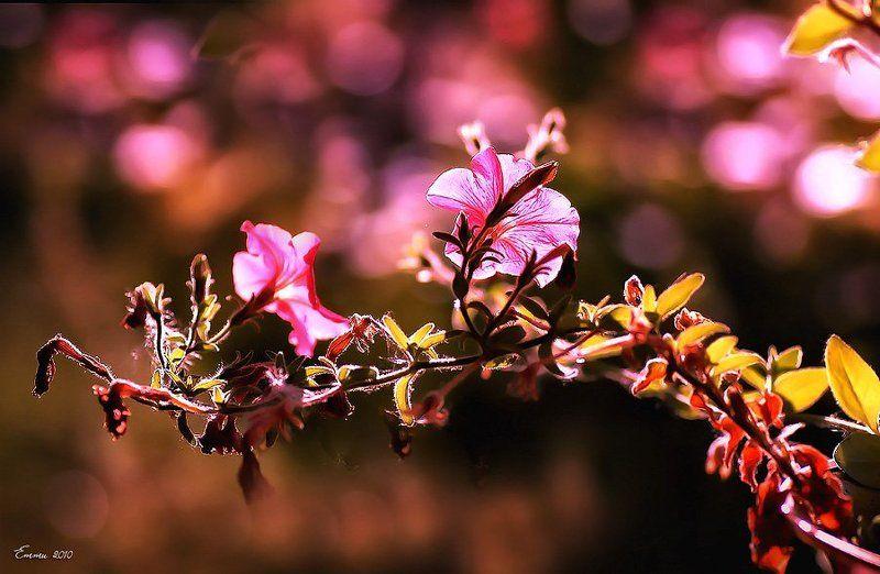 цветы, природа, лето \