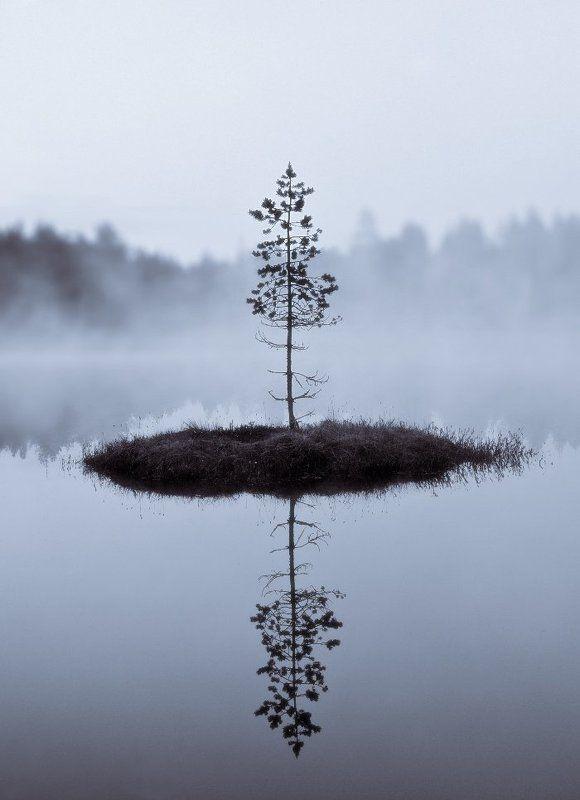 остров, туман, лес, вода, сосна Островphoto preview