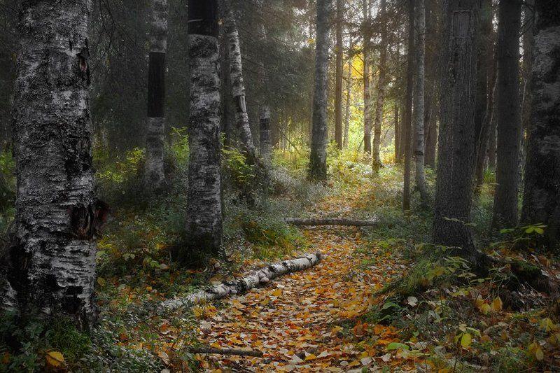 осень Ширшемаphoto preview
