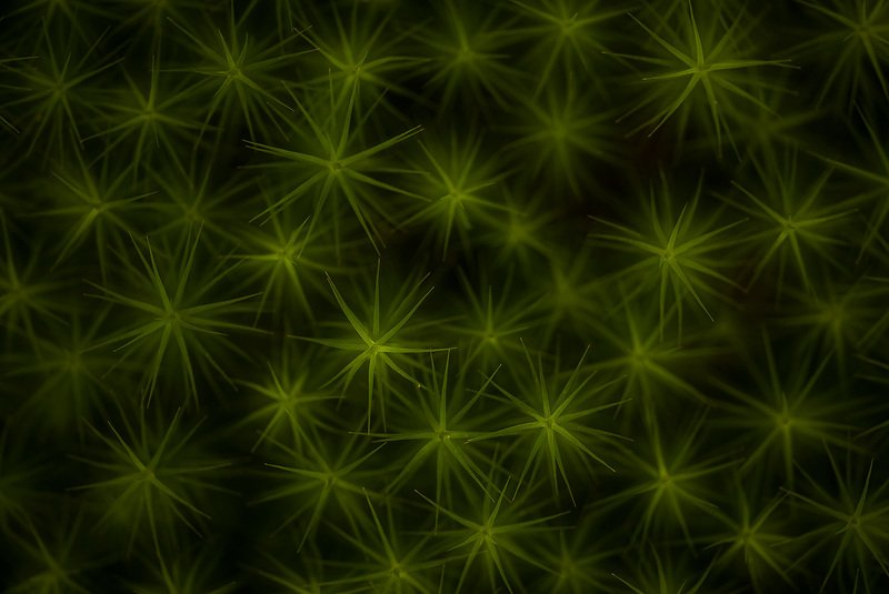 мох абстракция звезды фактуры Звездыphoto preview