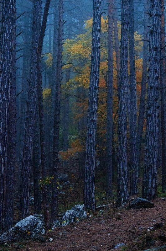 крым, ялта, октябрь, горы Хроники Нарнииphoto preview
