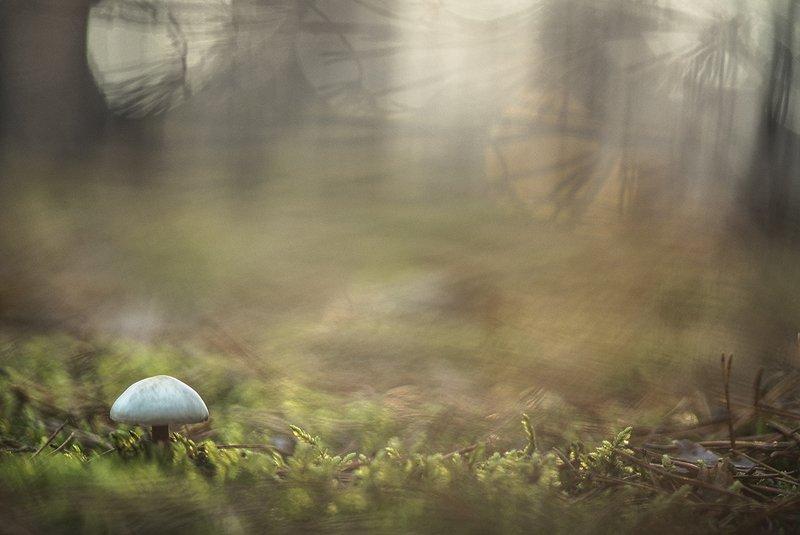 грибы, осень, свет. цвет, макро, видения, поганки, мох, октябрь, воронеж Грибные видения...photo preview
