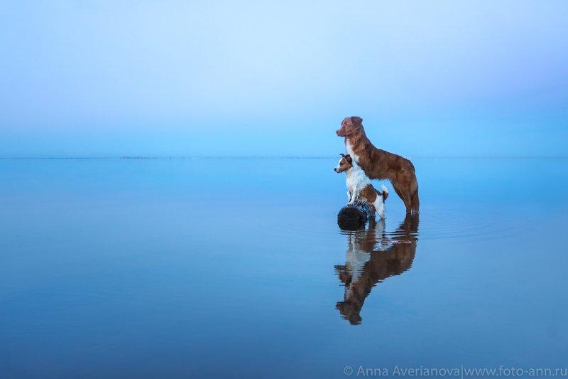 море, собаки на мореphoto preview