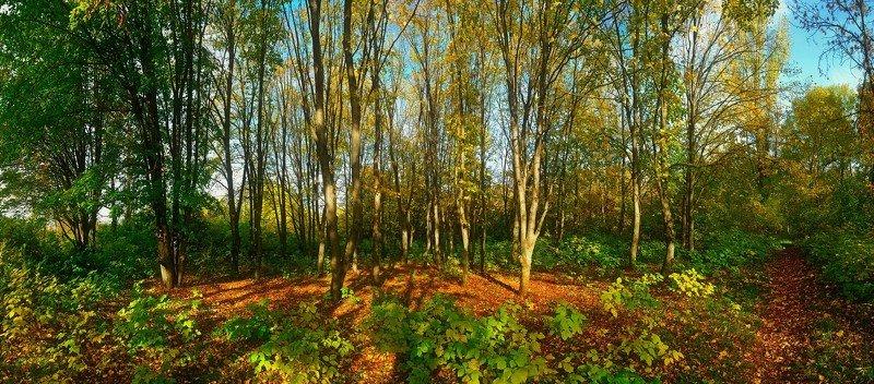 осень природа роща деревья пейзаж панорама Осень...photo preview