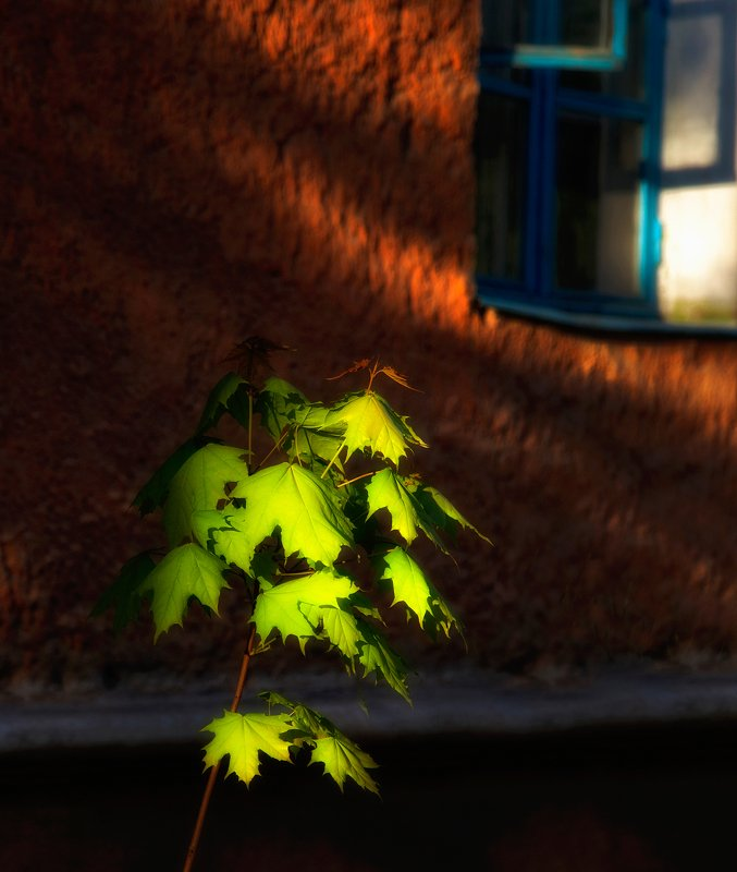 город,двор,дома,старый,уютный,окно Дворик,которого уже нет 5photo preview
