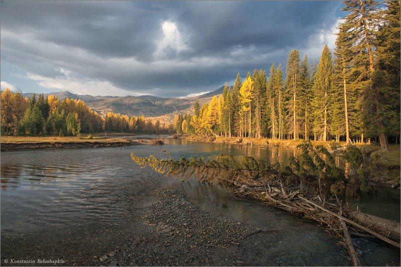 #алтай, #осень, #бытьтам_гдехочется, #река, , #константин_белошапкин К моим рекам таёжным...photo preview