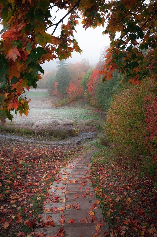 #пейзаж #природа #осень #листья #лестница Осенняя лихорадкаphoto preview