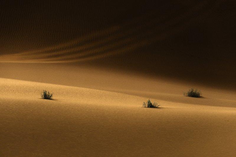 desert Desertphoto preview
