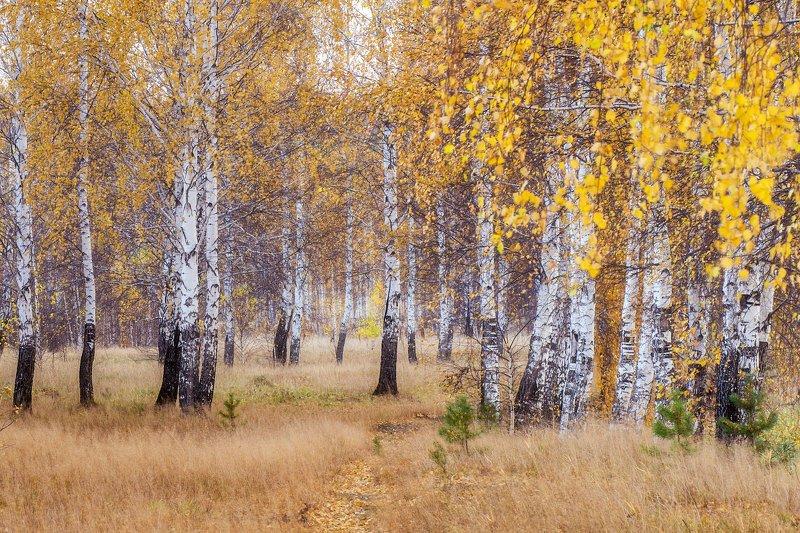Осень, ты куда!?photo preview