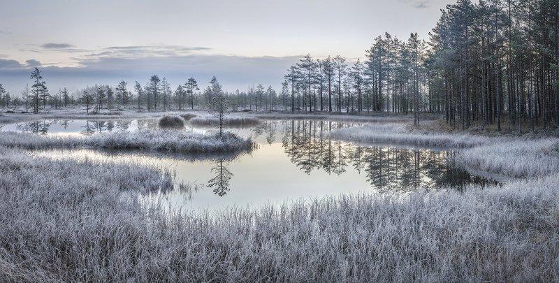 болото, ленинградская область, ленобласть, изморозь, ноябрь \