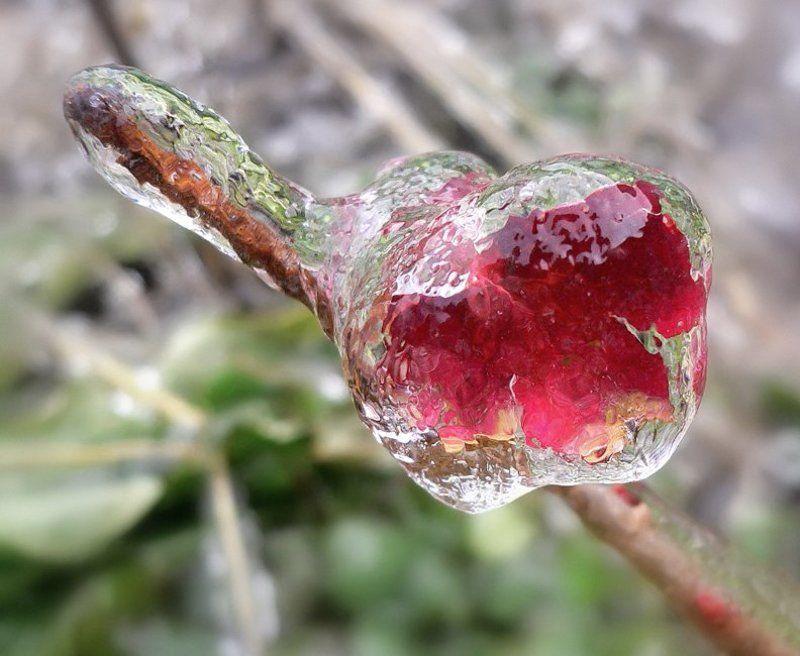 Ледяная серияphoto preview