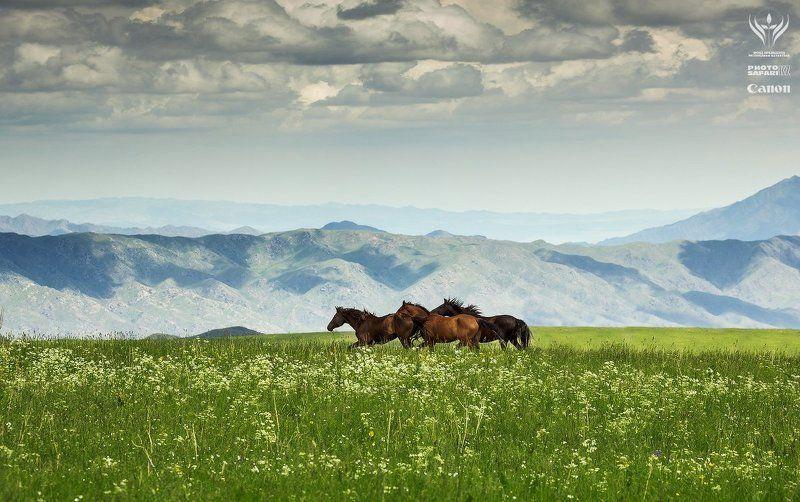 казахстан, алматинская область, табан-карагай, фотосафари Летние пастбища Табан-Карагай и окрестностиphoto preview