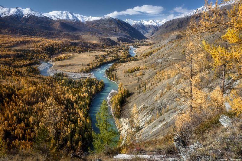 пейзаж, осень, горы, аргут, река, алтай, желтый, свет, лиственница Аргутphoto preview