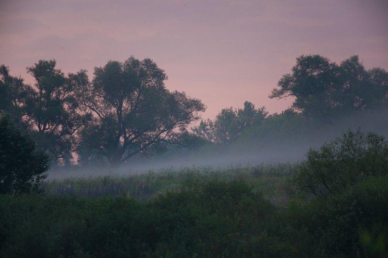 пейзаж, утро, туман, forest, nature, landscape июльскаяphoto preview