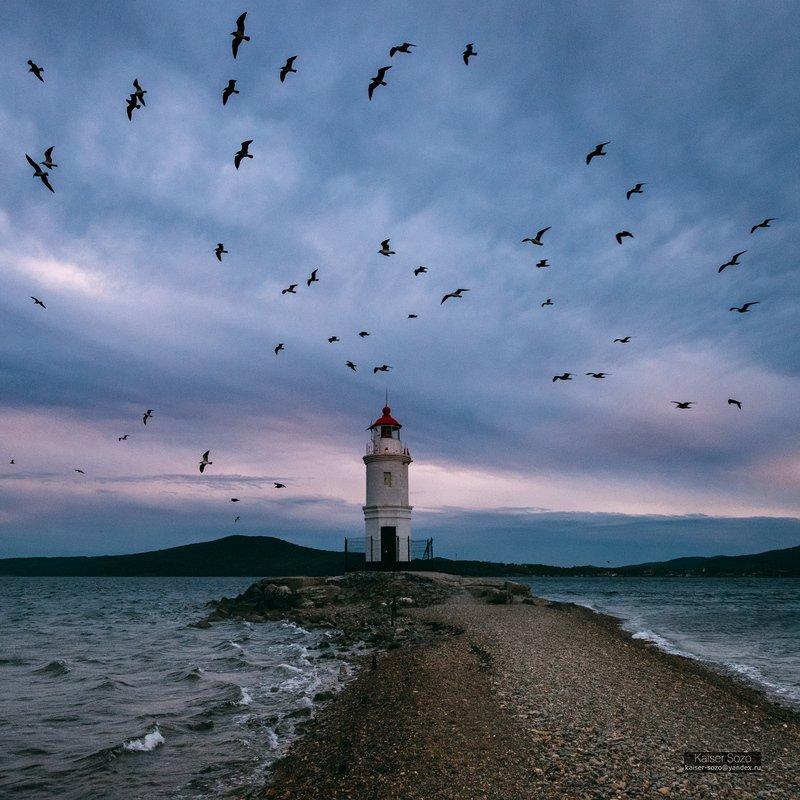 россия, приморье, владивосток, маяк, токаревский, тайфун, чайки Токаревский маякphoto preview