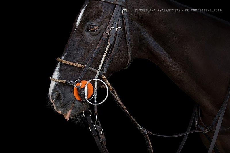 horse, лошадь, лошади, животные, animal Polo ponyphoto preview