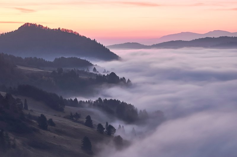 mist,mountains,fog,sunrise,tree Mist3photo preview