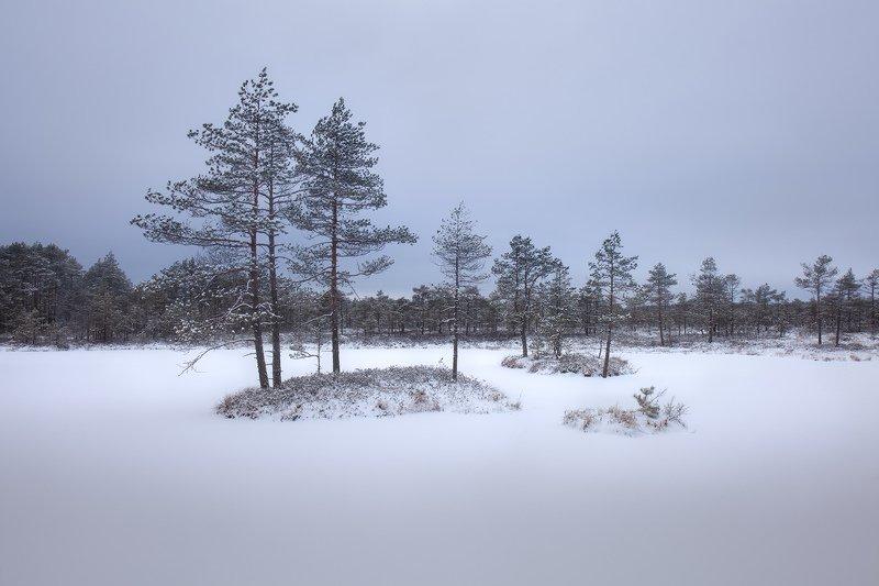болото, зима, ленинградская область, декабрь \