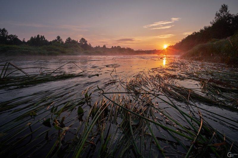 утро,река,молога,рассвет,пейзаж,лето,трава,солнце Утро на рекеphoto preview